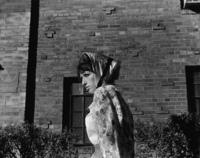 Cindy Sherman, Untitled Film Still