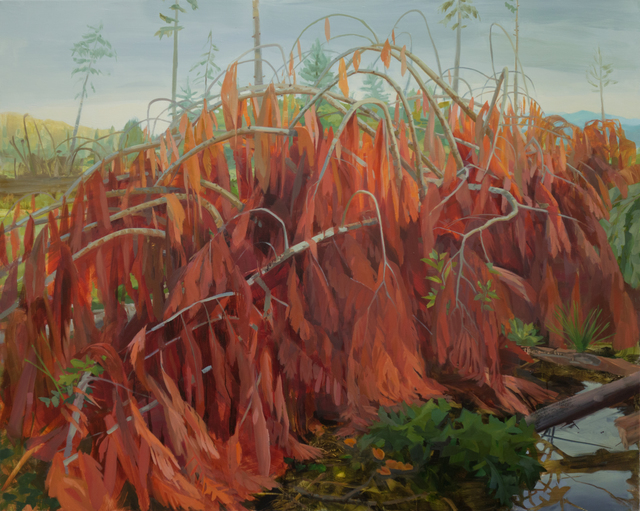 , 'Downed Cedar,' 2016, Inman Gallery