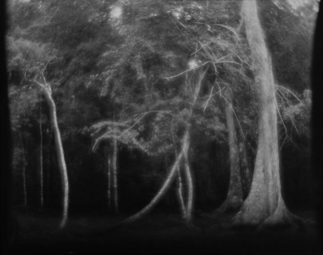 Linda Connor, 'Untitled (Trees)', nd, Scheinbaum & Russek Ltd.