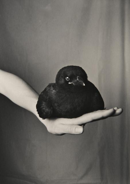 , 'Bird on Hand,' 2014, Foto Relevance