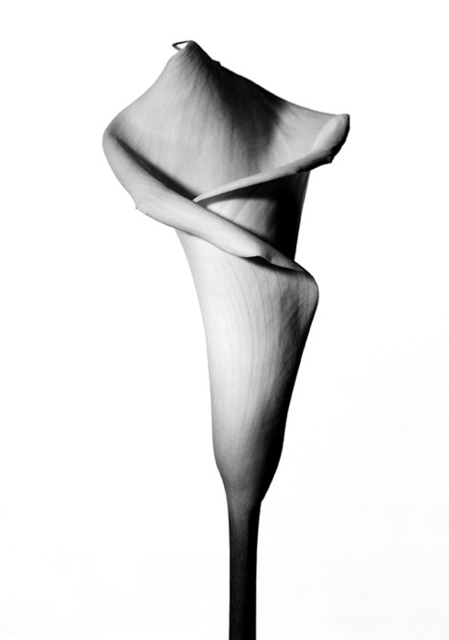 , 'Lily II,' 2006, Gallery House