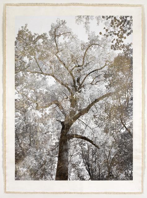 Bill Claps, 'Majestic Oak I ', 2015, Laurent Marthaler Contemporary