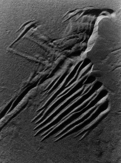 , 'L'oiseau des sables, Camargue,' 2000, Bernheimer Fine Art