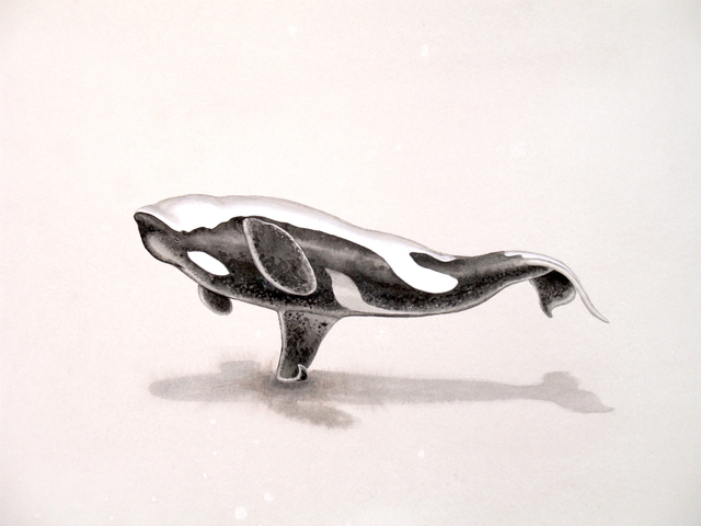 , ' Blackfish Out of Water iii,' 2017, G. Gibson Gallery
