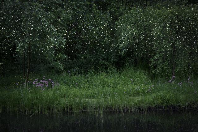 , 'Stars 6,' 2014, Crane Kalman Brighton