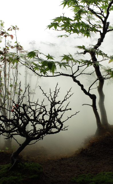 , 'Landscape in the Mist 002,' 2012, Galerie du Monde
