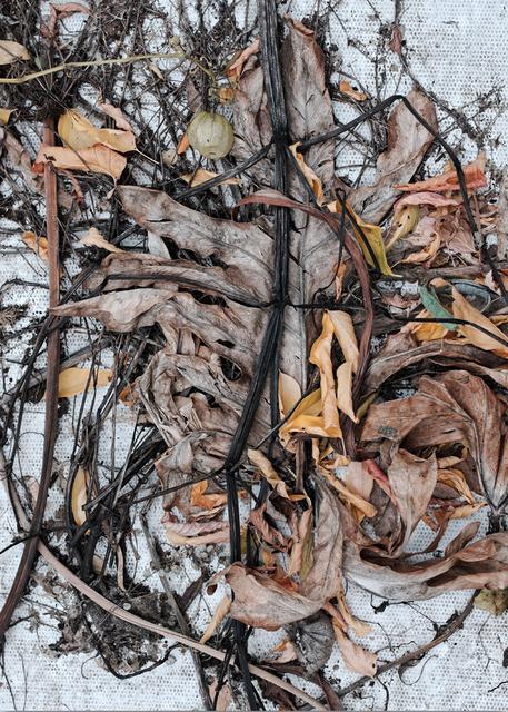 , 'Regard sur l'artificiel,' 2017, Galerie René Blouin