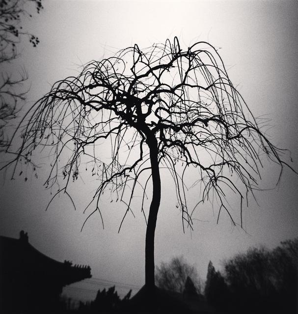 , 'Forbidden City Tree, Beijing, China,' 2007, photo-eye Gallery