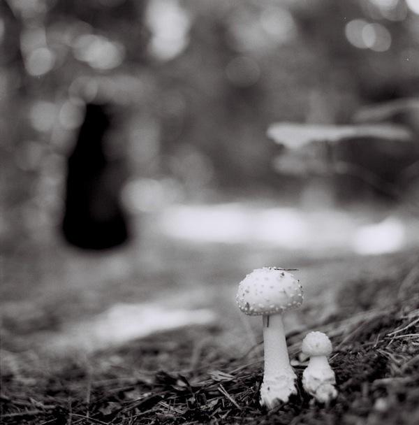 , 'Mushroom Study,' 2011, Susan Eley Fine Art