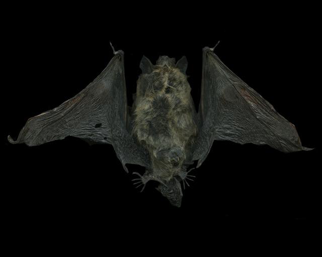 , 'Untitled (Bat),' 2015, Grundemark Nilsson Gallery