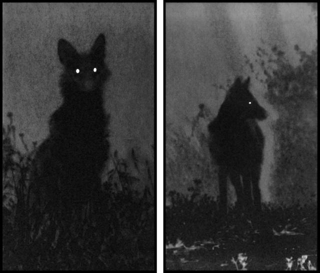 , 'Dark Shadows,' 2016, Pace/MacGill Gallery