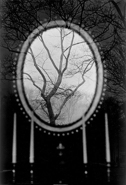 Eva Rubinstein | Tree in Mirror, New York (USA) (1967) | Artsy