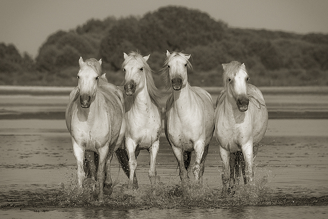 , '4 White Horses,' , FLOWER + HEWES