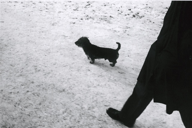 , 'Dog #8,' 1979, Galerie Peter Sillem