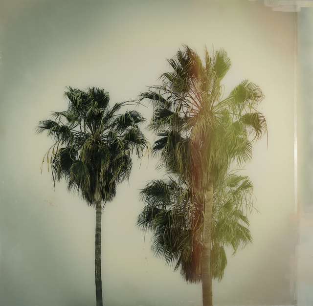 , 'Cali Palms,' 2018, parts gallery