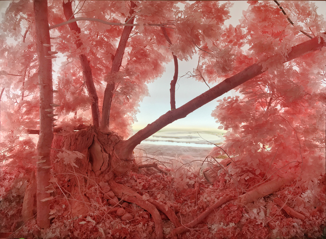 , 'Pink Forest Installation,' 2018, Pierogi
