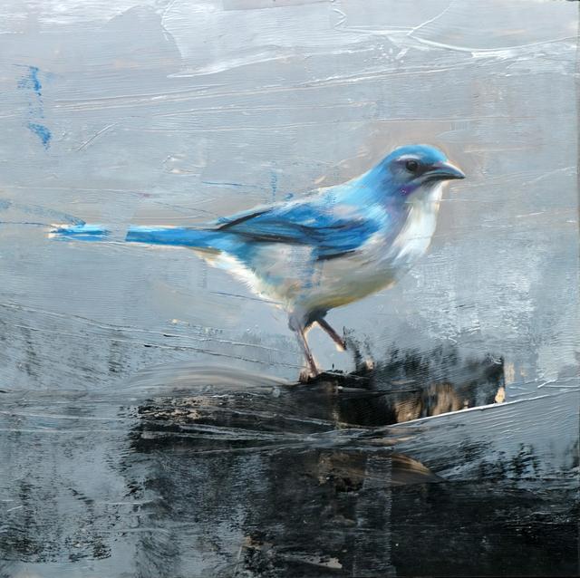 Alpay Efe, 'Studio Note with Scrub Jay', 2017, Abend Gallery