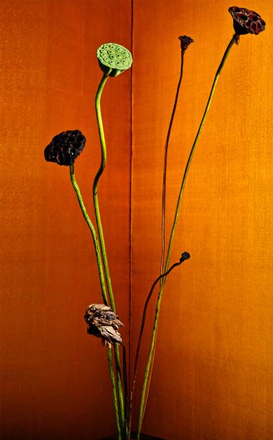 , 'golden light 25,' 2017, Galerie Marie-Robin