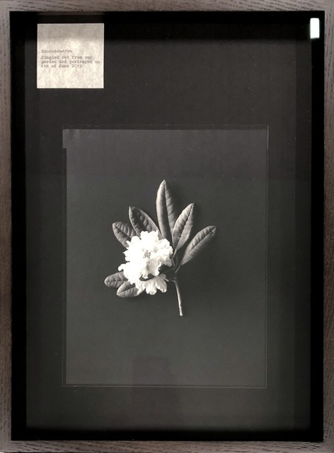 Nelli Palomäki, 'Rhododendron', 2019, Galerie Les filles du calvaire
