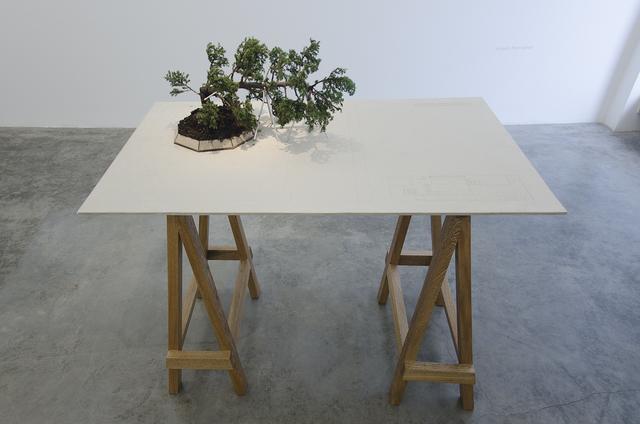 Edwin Monsalve, 'Bonsai', 2014, Galeria El Museo