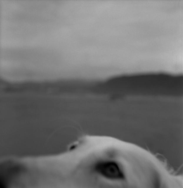 """, '""""El lamento de un perro"""",' 2012, Galería Juana de Aizpuru"""