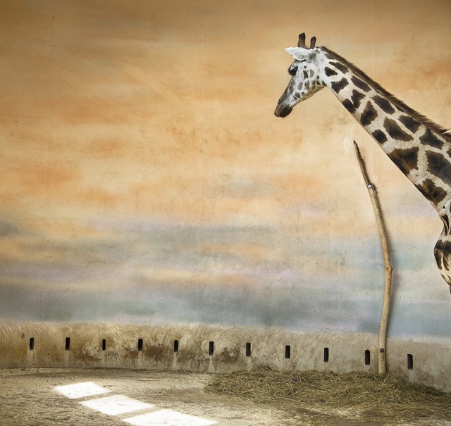 , 'Giraffe and Light,' , Galerie Dumonteil