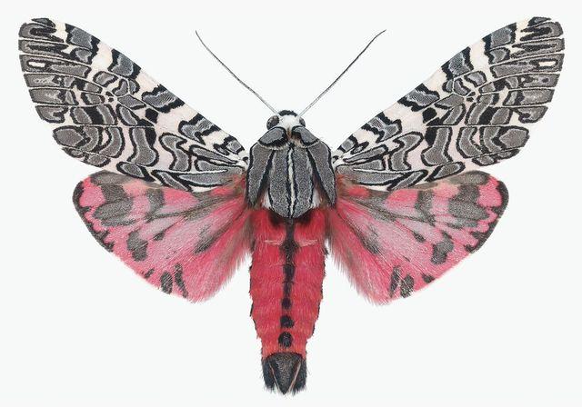 , 'Arachnis Picta,' , ArtStar