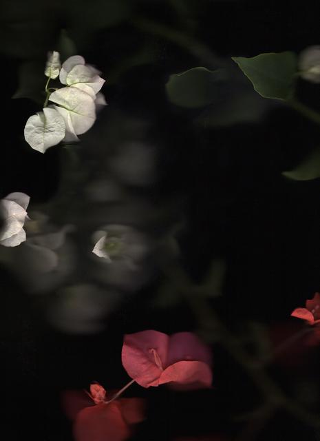, 'Bougainvillea at Magic Hour (No. 41),' 2018, River