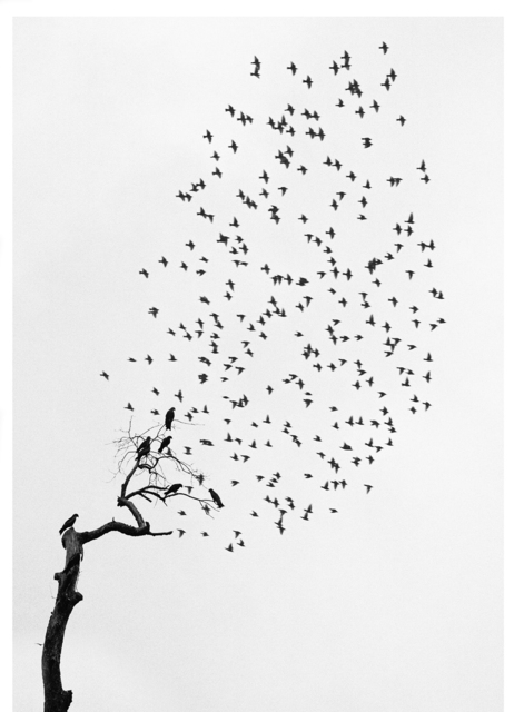 , 'Delhi, India (Flock of Birds),' 1999, Peter Fetterman Gallery