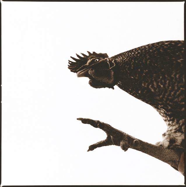 Nine Francois, 'Rooster I', Weston Gallery