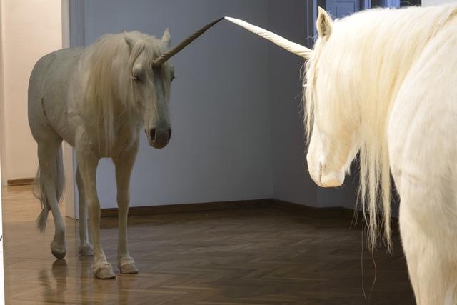 Aleksandar Duravcevic, 'Another winter', 2007, Sculpture, Taxidermy and black mirror, espacio artkunstarte