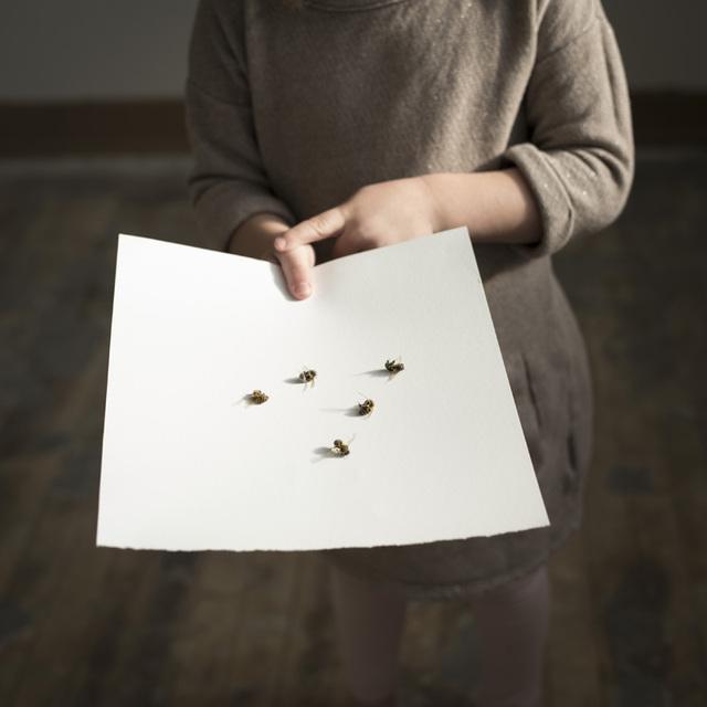 , 'Five Hornets, Rockport, Maine,' 2015, Robert Mann Gallery