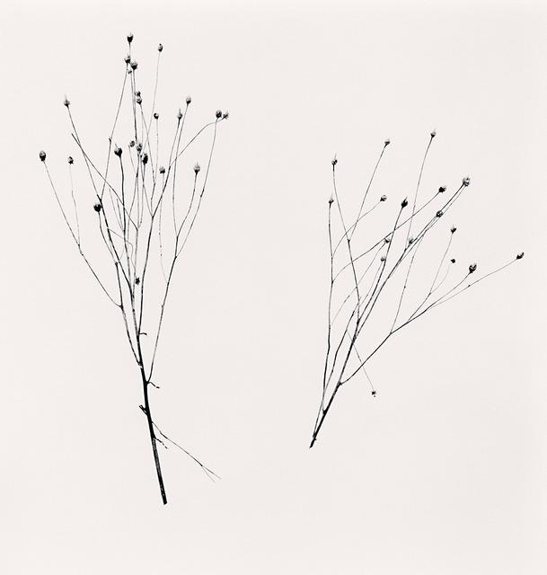 Michael Kenna, 'Two Winter Stalks, Biei, Hokkaido, Japan', 2013, G. Gibson Gallery