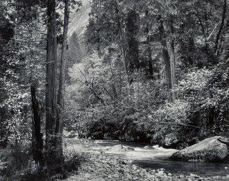 Tenaya Creek, Dogwood, Rain, Yosemite National Park, California
