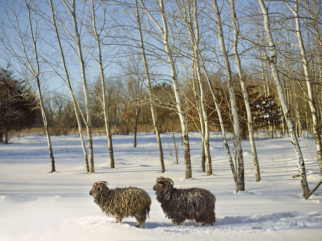 , 'Annabelle and Friend, Anoka County, Minnesota, USA,' 2017, KLOMPCHING GALLERY