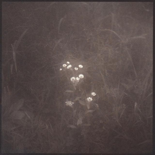 Denise Oehl, 'Tiny Flowers', 2018, John Davis Gallery