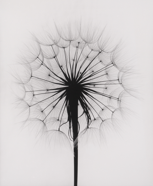 , 'Scottish Thistle, Rochester, NY,' 1958, Pucker Gallery