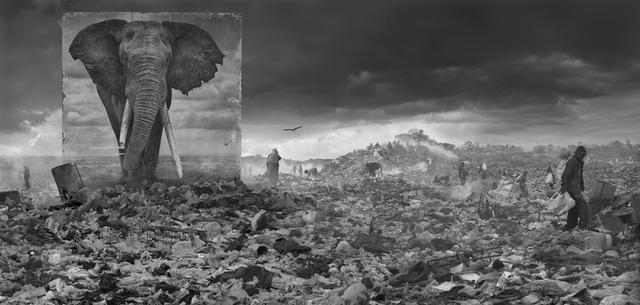 , 'Wasteland with Elephant,' 2015, CAMERA WORK