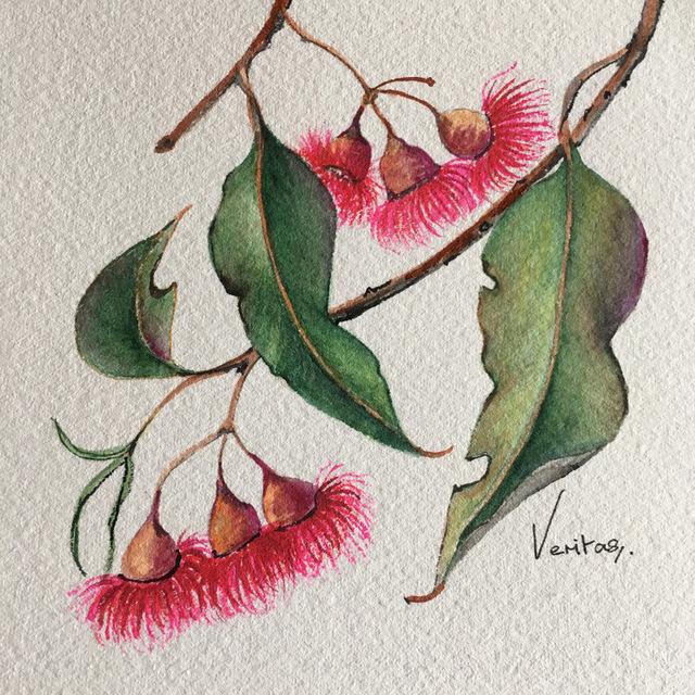 , 'Corymbia Ficifolia- Red Flowering Gum,' 2018, Margaret River Art Gallery