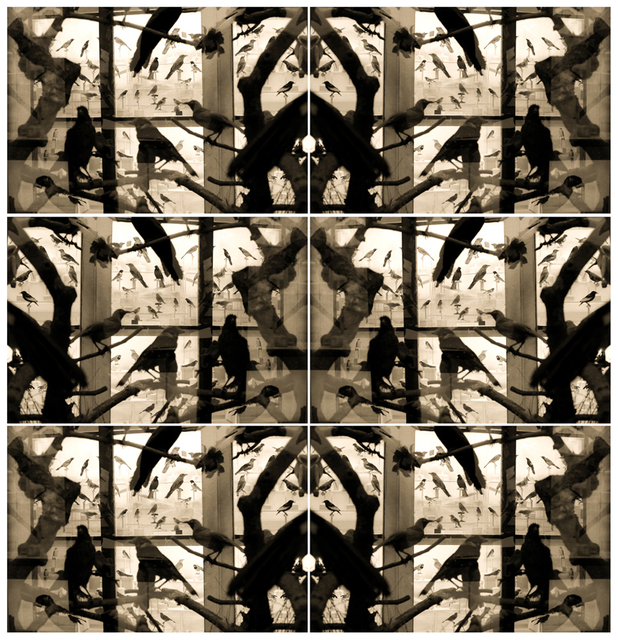 , 'Pájaros sin vuelo,' 2017, Patricia Conde Galería