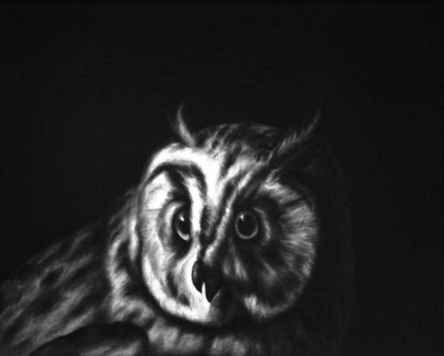 , 'Owl (after Durant),' 2013, DANESE/COREY