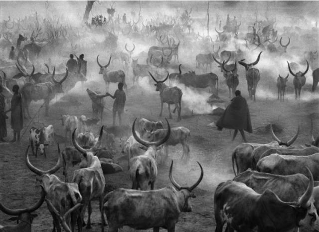 Sebastião Salgado, 'Dinkas, South Sudan', 2006, Photography, Gelatin silver print, Atlas Gallery