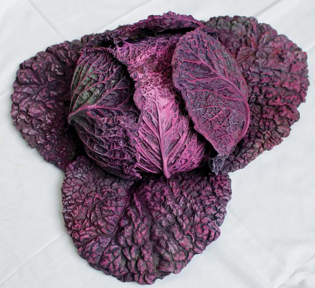 Rafael Muyor, 'red cabbage opened', 2019, Sculpture, Bronze, Galería Marita Segovia