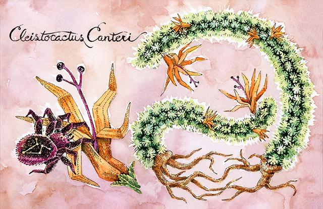 , 'Cleistocactus Canteri,' 2015, Helikon Gallery & Studios
