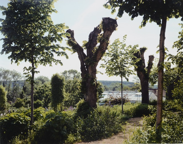 Stephen Shore, 'Pollarded Tree', 2002, Chelsea Art Group