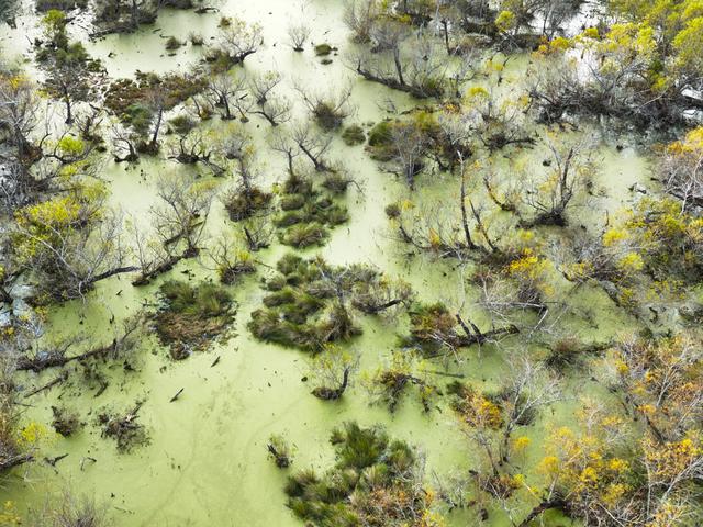 , 'Willows and Algae, Pecan Island, Vermillion Parish, Louisiana,' 2014, A Gallery for Fine Photography