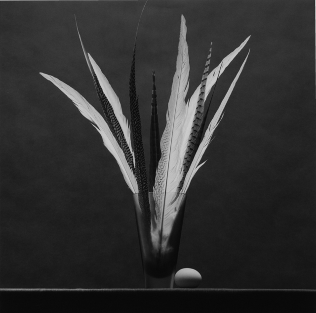, 'Feathers and Egg,' 1985, Mai 36 Galerie