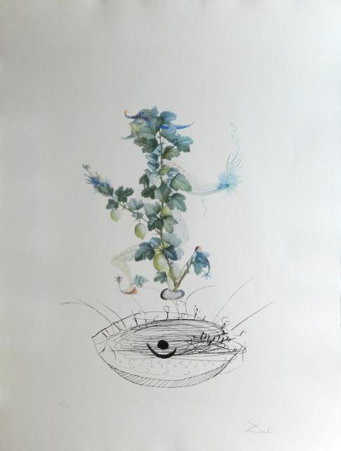 Salvador Dalí, 'FlorDali/Les Fruits Gooseberry', 1969, Fine Art Acquisitions