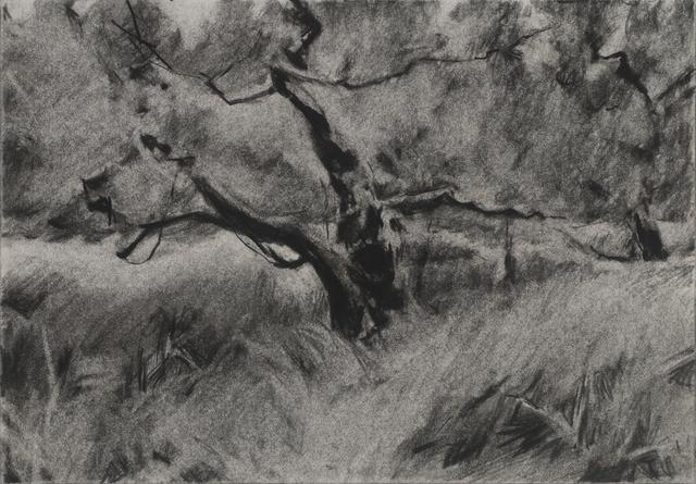 , 'Orchard #2,' , Dowling Walsh