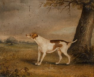 A hunting dog in a landscape